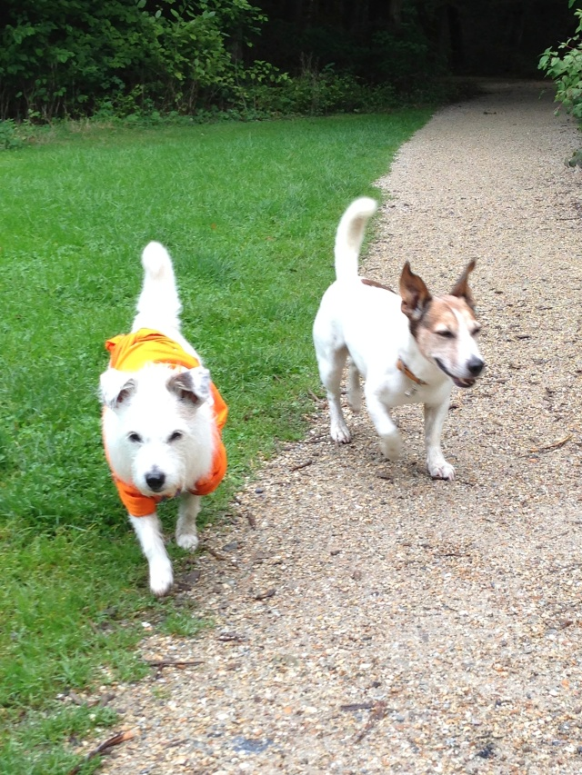 Mini en Morris in het Flevo park
